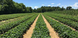Esfuerzos mundiales por la seguridad alimentaria en un clima cambiante